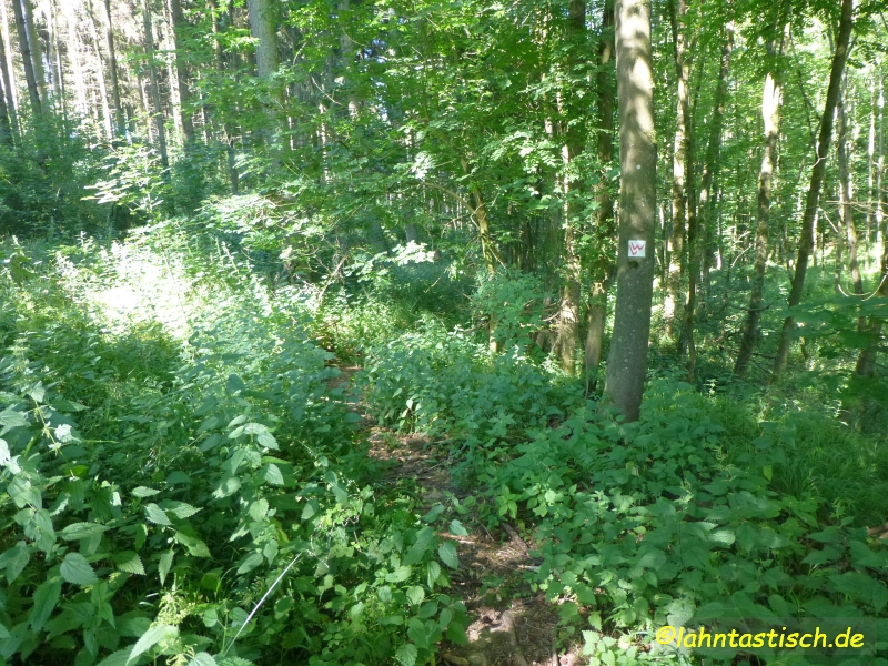 Der Weg im Wald... von Brennesseln überwuchert