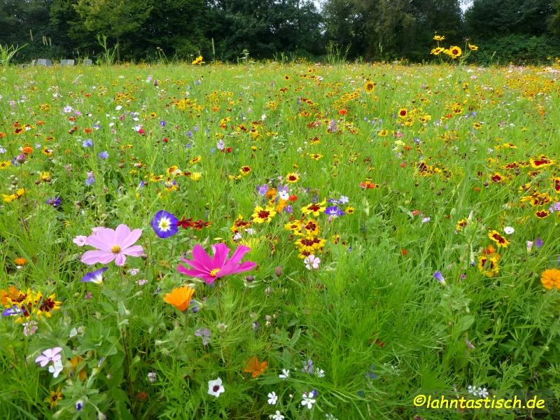Die Blumenwiese ist zur Zeit ein sehr beliebtes Motiv