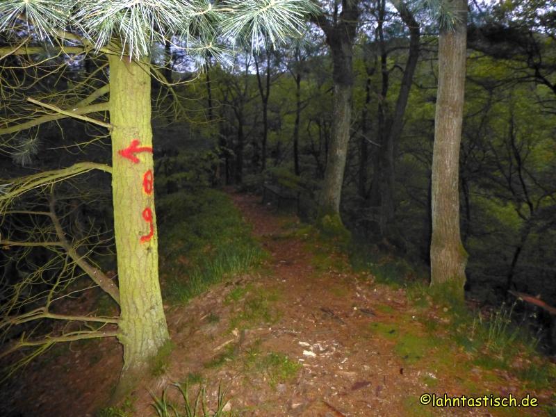 Durch den aufwachenden Wald hinab ins Tal